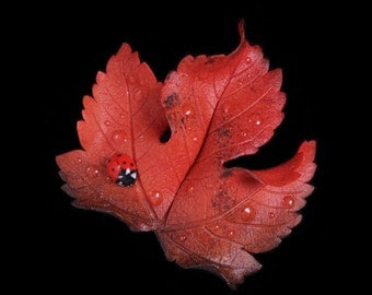 Red Sycamore Leaf & Ladybird Brooch