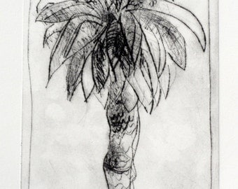 original etching KYNETON PARK PALM handpulled drypoint etching by Wendy McDonald