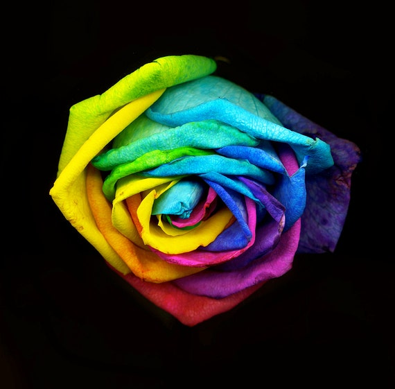 Items similar to rainbow colored rose fine art for Rainbow colored rose