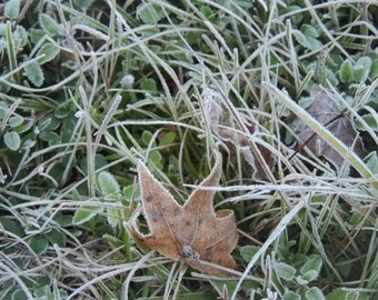 Frosty grass and a leaf
