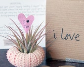 valentine // i love you // air plant garden