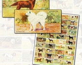 Antique Dog Breeds Domino Digital Collage Sheet 2x1 horizontal domino size