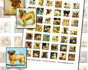 Antique Pug 1x1 inch square inchies digital collage sheet photograph painting pugs are the cutest