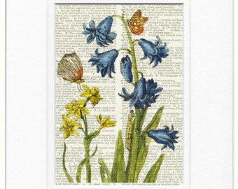 Blue Bells, 1600's botanical XII print