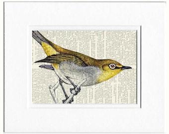 passerine bird II print