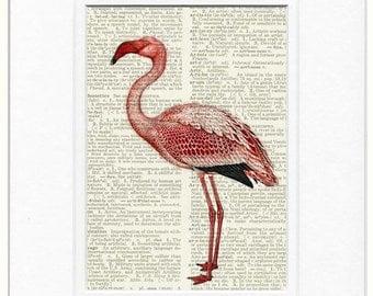 Flamingo, pink flamingo IV print