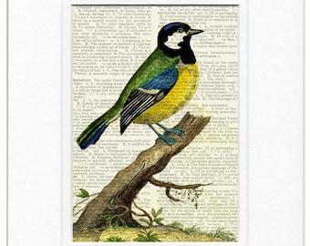 bird V - 1700's bird print