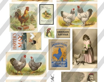 Digital Collage Sheet  Vintage Images Chickens Roosters (Sheet no. O118) Ephemera-Instant Download