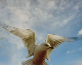 Seagull Photography Print, Angel Wings, Blue and White Nautical Coney Island Photo