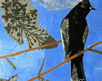 Black Bird Collage Giclee Print 8 x 10 Phainopepla