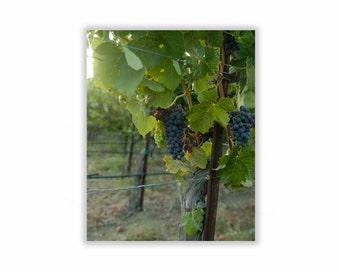 Wine Grapes, Kitchen Art,  8x10,  Art Print, Wine Country Decor, Grapes Wall Decor