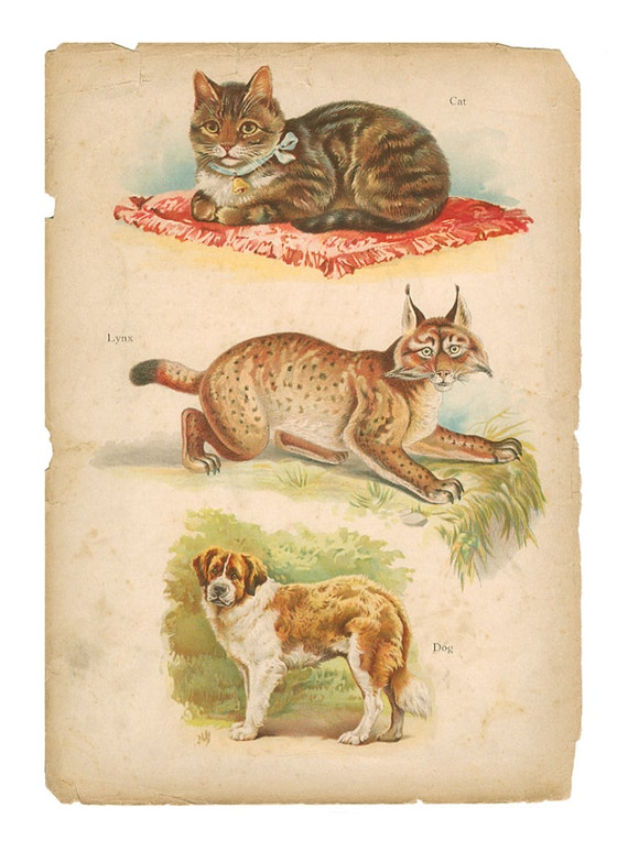 Cat, Lynx, Dog, Reproduction Vintage Print, Illustrated Natural History, 1902 Raphael Tuck, Paul Wagner, Frameable Art