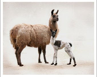 Animal Art - Llama Baby Art Print - Mother and Child - Photograph - Kids Wall Decor - Nursery Wall Art - Artist's Proof - Mother's Day Gift