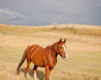 Horse in Landscape Photograph, Color Horse Wall Art, Western Country Photography
