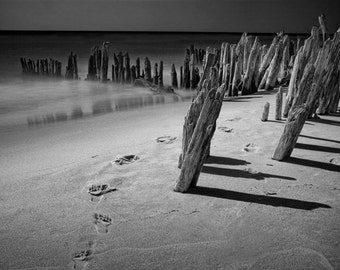 Human Footprints Trail among the Pilings on the Beach at Kirk Park by Lake Michigan near Grand Haven A Black and White Fine Art Photograph