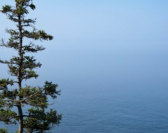 Lone Pine Tree overlooking the Atlantic Ocean on Mount Desert Island in Maine's Acadia National Park No. 024 - A Fine Art Photograph
