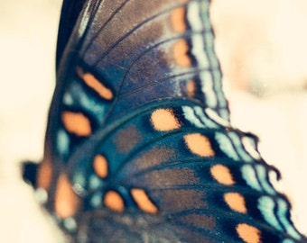 Butterfly Photo - Fine Art Photography, nature photo, wings, turquoise, blue, black, coral, orange, gray, aqua, teal, wall art