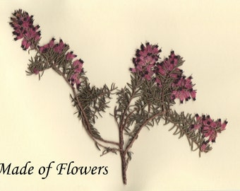 Pressed Flower Art Print Heather