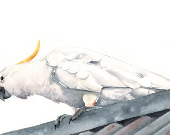 Cockatoo Painting Archival Print of watercolor painting A4 print wall art print - bird art print
