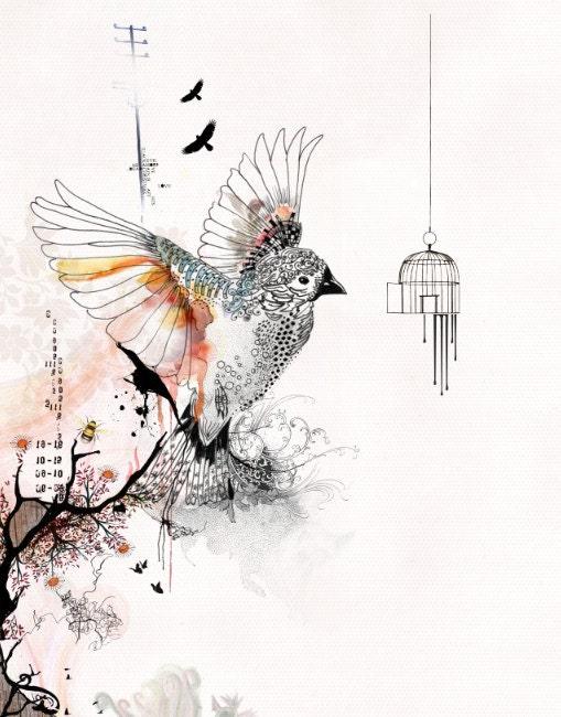 Prints illustrations Bird cage art Living room art by ...