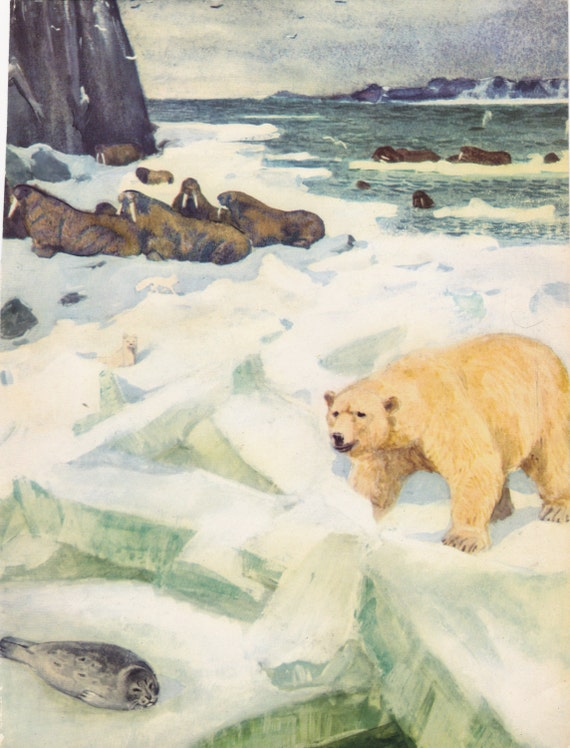 Vintage Book Page, Two-sided A4 color print (Polar Bear, Deers) - 1962, For Wall Hanging, Handmade Projects