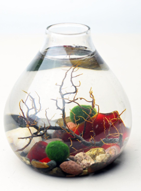 Marimo terrarium japanese moss ball aquarium by pinkserissa for Betta fish moss ball