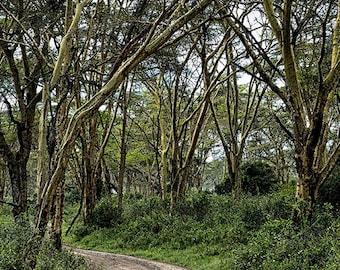 Road To Lake Nakuru - Available Sizes (5x7) (8x10) (11x14) (16x20) (20x25) (24x30)