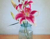 Stargazer Lilies Fine Art Photography Feminine Shabby Chic Aqua Mason Jar Flower Floral Hot Pink Blue Grey Gray Cottage Home Decor Wall Art