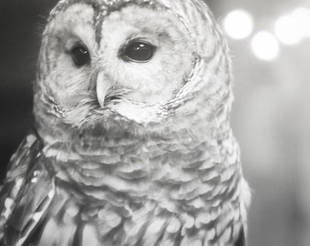 Owl White Gray Grey Nature Woodlands Barred Owl Forest Soft Dreamy Softly Focused Rustic Nursery, Fine Art Print
