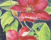 Red clematis flower painting 51/2x8 original watercolor painting floral earthspalette