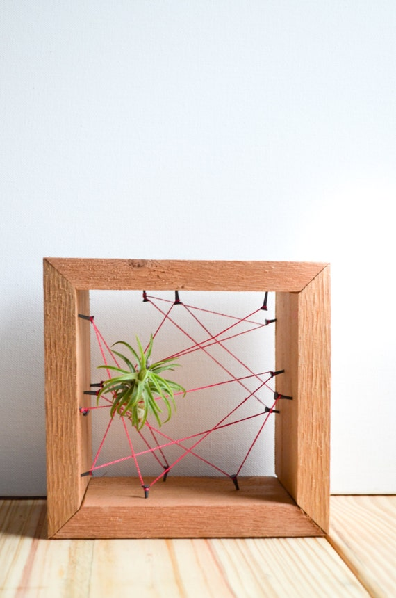Neon Pink Air plant Rustic Reclaimed Recycled salvaged wood holders. Vase, wall decor, geometric, terrarium wedding birthday gift