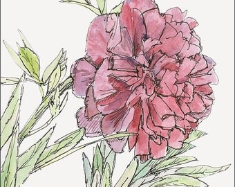 Romantic red and pink peony, any wall valentine decor wall art flower art room decor archival PRINT signed giclee flower art print, 8.5x11