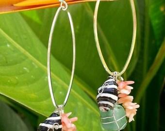 Zebra Shell Sea Glass Pink Coral Shell Earrings