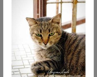 Pet photography, Cat, Kitty, Portrait, Tabby, animal photo, Nursery, 8x10, wall decor, animal lover, for her, Christmas gift, under 50