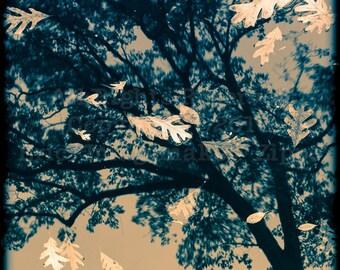 Oak Tree Reflection, Oak Art, Fall Oak Wall Art, Water Reflection Decor, Autumn Black and White Nature, Fine Art Photography 8x8 Print