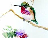 Hummingbird, original watercolor painting, 9 X 12, purple, green white bird painting