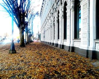 Autumn In Salem