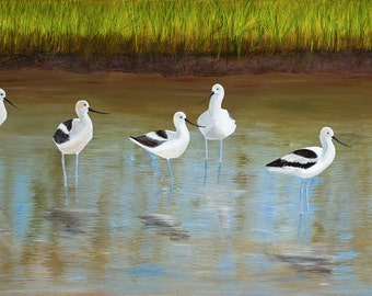 Limited Edition - American Avocets