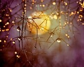 Nature Photography, Harvest Moon, Trees, Raindrops, Night Sky, Autumn, Fine Art print, Home Decor.