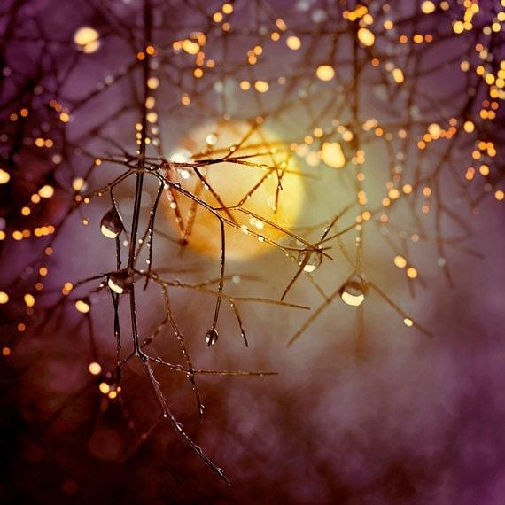 Nature Photography Harvest Moon Trees Raindrops Night Sky