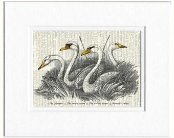 1800's Swans artwork print