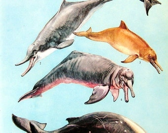 Dolphins - 1973 Vintage Encyclopedia Print Book Page