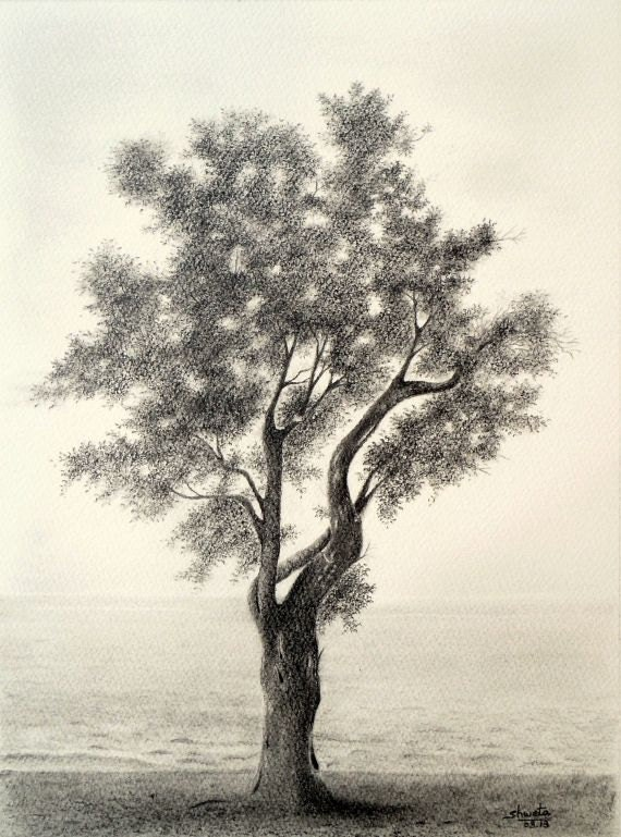 Olive Tree Pencil Drawing