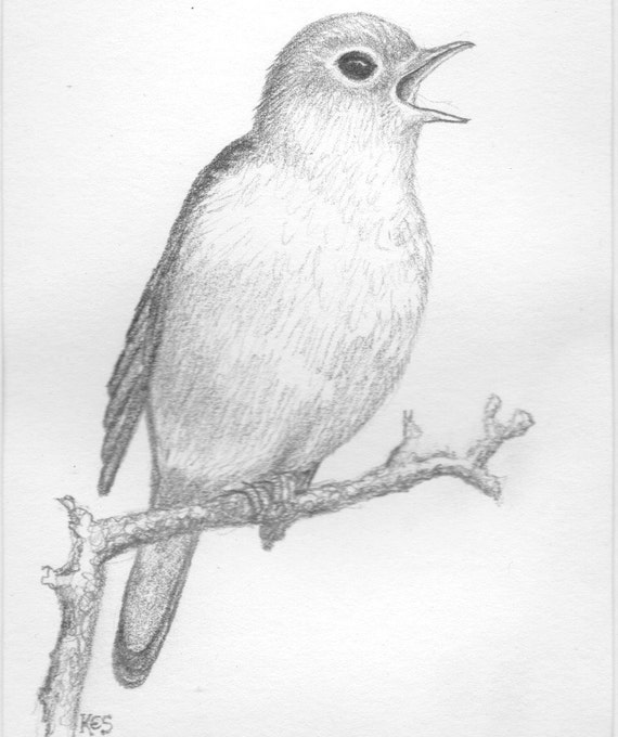 Line Drawing Of Animals And Birds : Dessin d oiseau rossignol au crayon original art