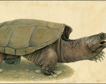 """Snapping Turtle - 18.5"""" x 6"""" open edition print by Matt Patterson, turtle print, turtle painting"""