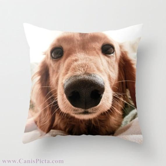 Throw Photo Pillow Dachshund Dog Photography 16x16 Decorative