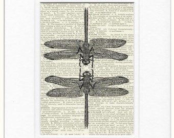 dragonflies dictionary page print