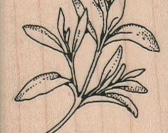 Rubber stamp mounted sage plant  herb stamp   number 1050   plant