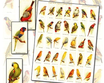 Antique Pet Bird Domino digital collage Sheet 1x2 inches for 25mm x 50mm