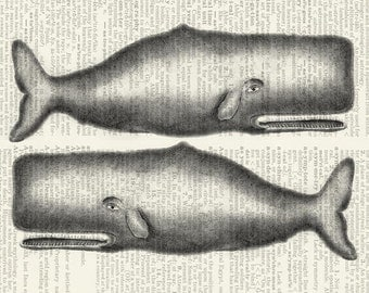 Whales dictionary page print